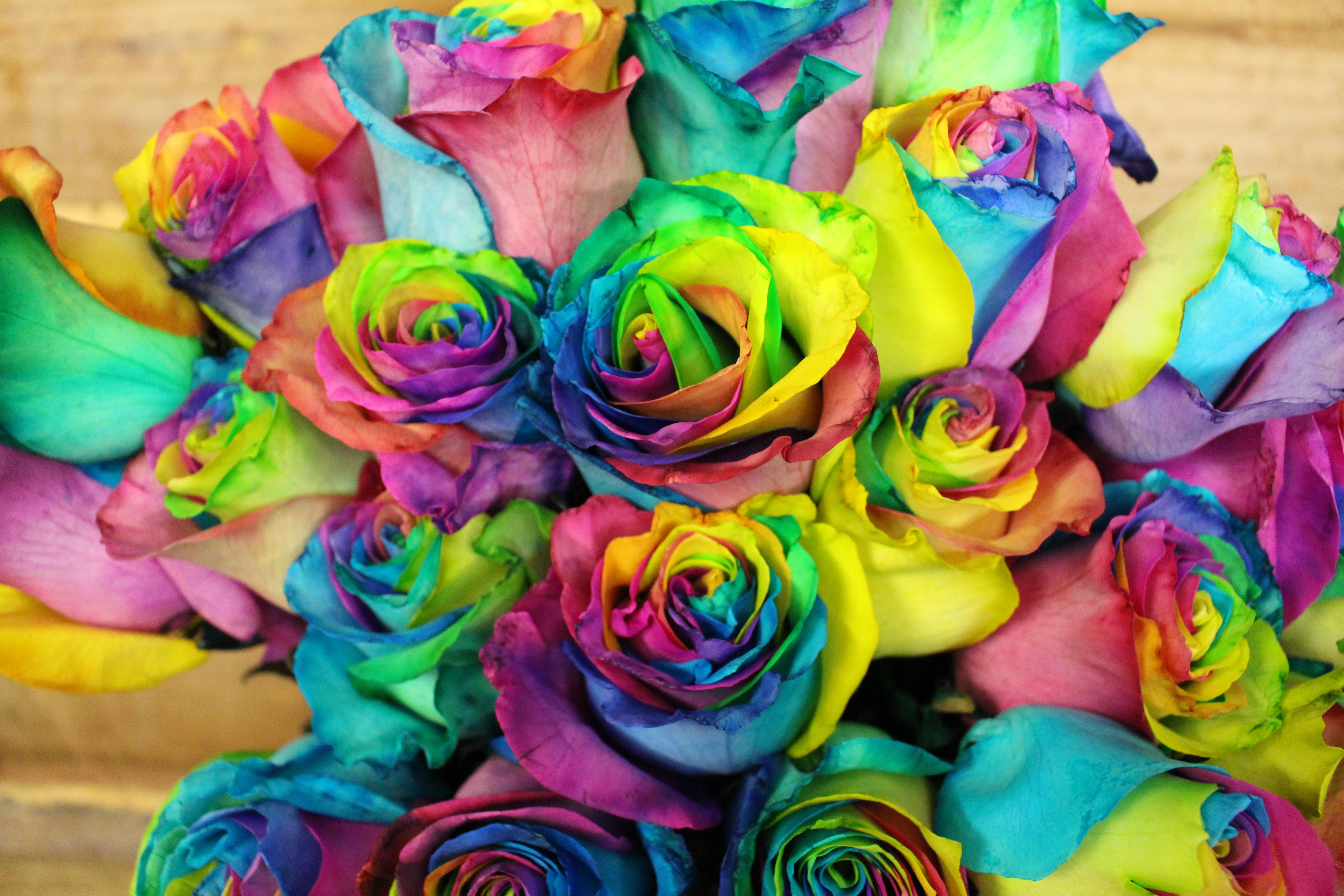 Rainbow Roses Flowers Of Bethlehem